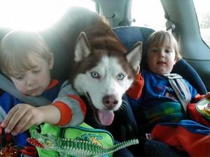 husky-z-dziecmi