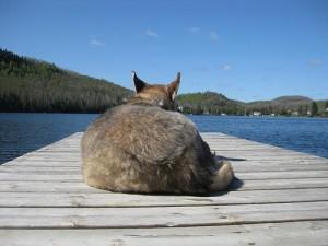 husky-na-molo