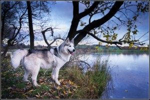 husky-spacer